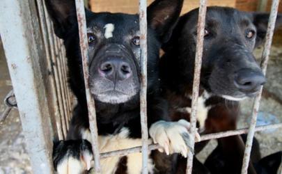 Иосиф Кобзон и борьба с бродячими собаками