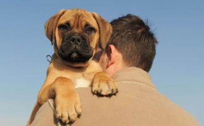 Хозяин погиб, спасая свою собаку