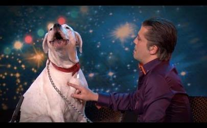 Собака поет песню «I Will Always Love You»