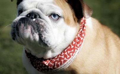 Такой уникальный собачий нос