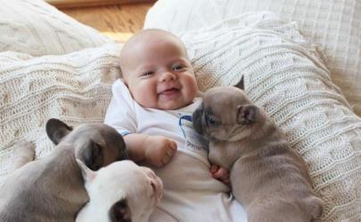Наиболее подходящие для детей породы собак