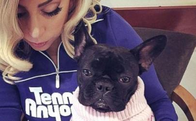 Леди Гага завела своей собаке страницу в Instagram