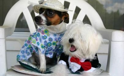 Сервис для собак