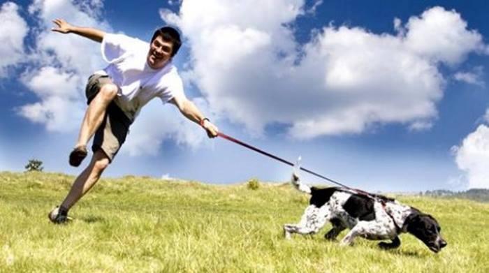 Почему собака не слушается хозяина?