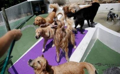 Собачий «детский  сад» в Бразилии