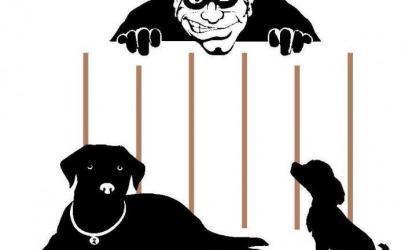 Как и для чего похищают собак