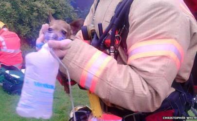 Пожар в собачьем питомнике в Манчестере