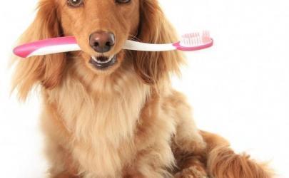 Зачем собаке чистить зубы?