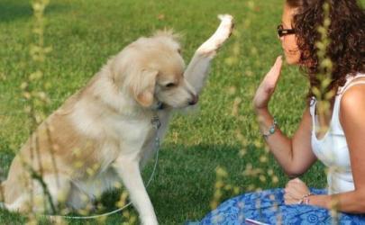 Цирковые трюки с собакой