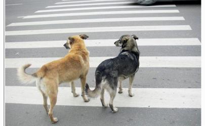 Собаки тоже знают ПДД!