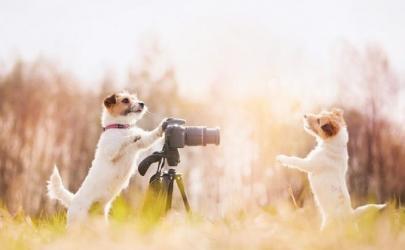 Фотографируем щенка правильно