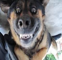 Собака улыбка!