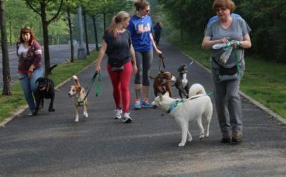 Как собакам преодолеть свои страхи?