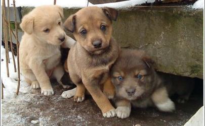 Чем помочь бездомной собаке?