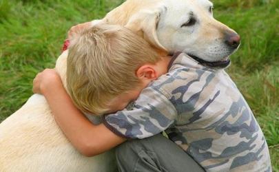 Отек Квинке у собак.