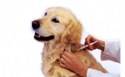 Когда делать прививки щенку?
