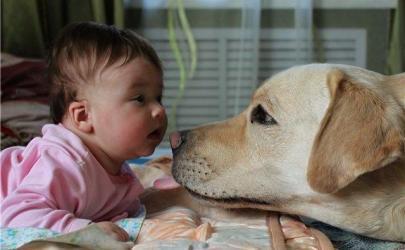 Младенец и собака