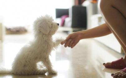 Стресс связывает людей и собак