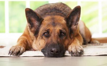 Собаки не любят людей, которые плохо относятся к их владельцам