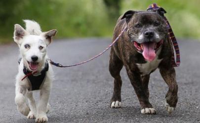 Знакомьтесь: брошенный слепой пес Глен и его верный поводырь Баз