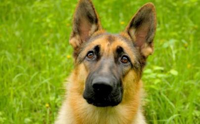 Наша суетная жизнь оказывает плохое влияние на собак
