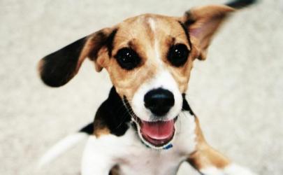 Стресс истощает собак