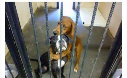 Соцсети спасают жизни собак