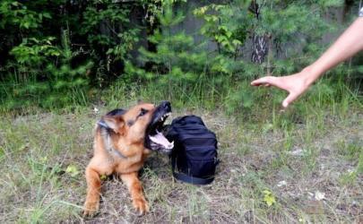Безопасность собаки в городе