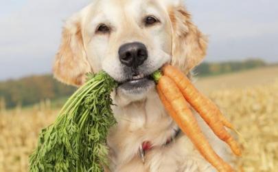 Почему владельцы собак сажают своих питомцев на сырую диету