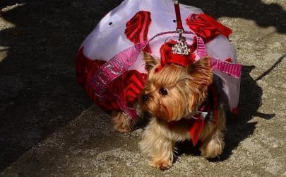 Собаки приняли участие в конкурсе костюмов