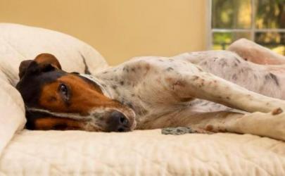 Аллергия у собак: причины, симптомы и лечение