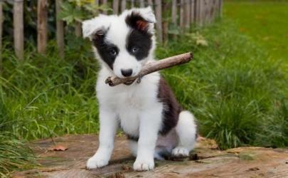 Как правильно дрессировать щенка
