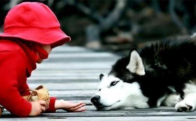 Особенности содержания собаки рядом с маленьким ребенком