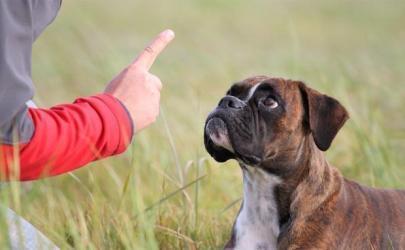Почему собака ест кал и как с этим бороться