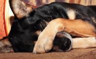 Как правильно наказать собаку