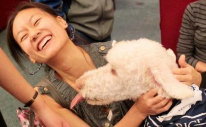 Собаки помогают успокоить студентов перед выпускными экзаменами