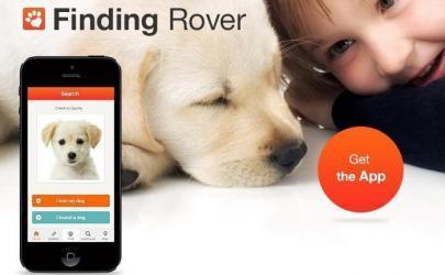 Приют для животных использует специальное приложение, помогающее находить потерянных собак