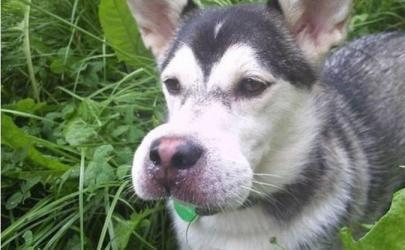 Первая помощь собаке при укусах насекомых и змей