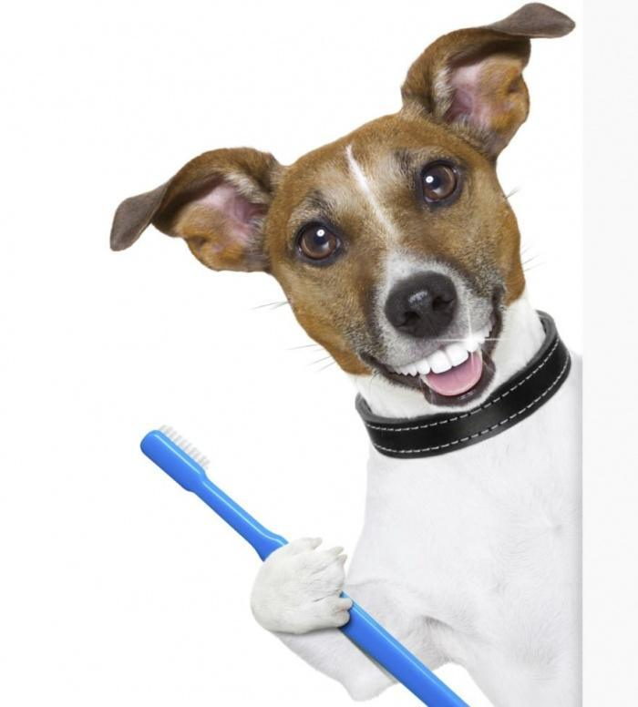 Здоровье и уход за зубами собак