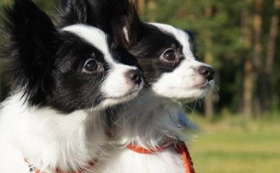 Советы по открытию питомника для собак