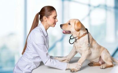 Болезни суставов у собак и их лечение