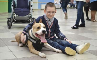 Доготерапия - лечение с помощью собаки. В чем оно заключается?