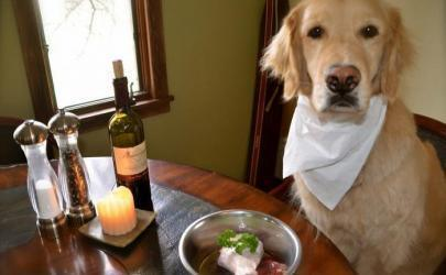 Наутральное питание собаки - основные правила
