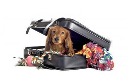 Перевозим собаку в самолете - проверено на собственном опыте