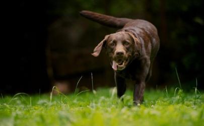 Если собаку укусил клещ - первая помощь
