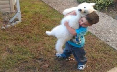 20 доказательств того, что детям необходимы домашние животные, основываясь на данных сайта АдМи.ру