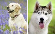 Что получится, если смешать две породы собак по версии сайта ADME.RU