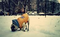 Радость собаки , свежий снег