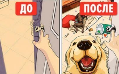 Жизнь ДО и ПОСЛЕ появления собаки в доме
