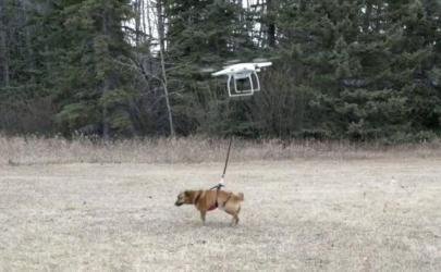 Дрон-друг человека и собаки!)